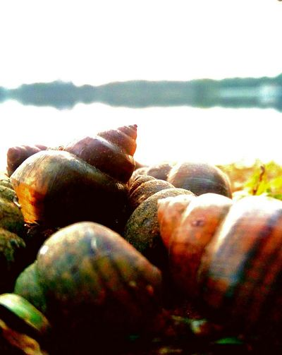 Just:::!!! ...... Nature