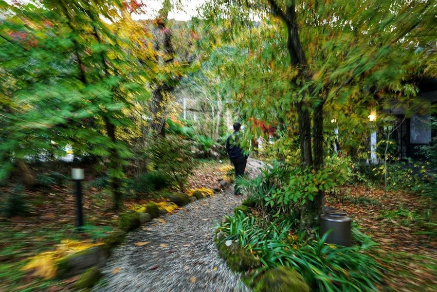Japan Photos Treepark Growth Nature Tree Outdoors Green Color Beauty In Nature Fall Day Tranquility Multi Colored Freshness Urban Nature Morning Urban Rural Scene Garden Walking Around Scenics Autumn Japanese Garden Travel Streamzoofamily