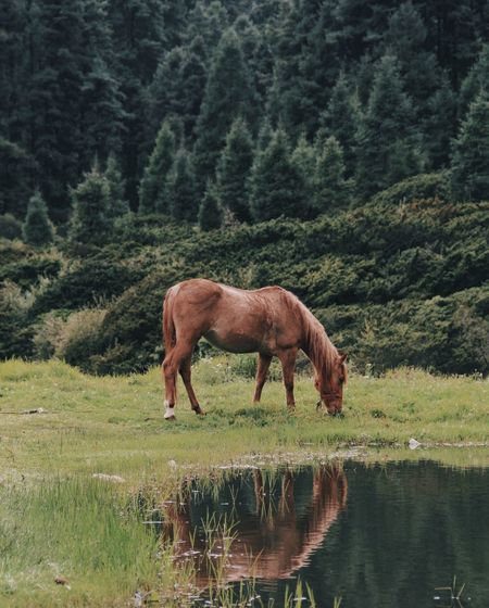 Horse grazing on field