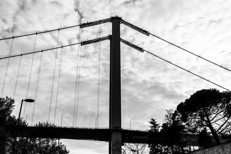 Cloud - Sky Sky Tree Nature Low Angle View No People Plant Cable Day Built Structure Architecture Connection Outdoors Bridge Bridge - Man Made Structure Suspension Bridge Metal Cable-stayed Bridge Transportation Power Supply