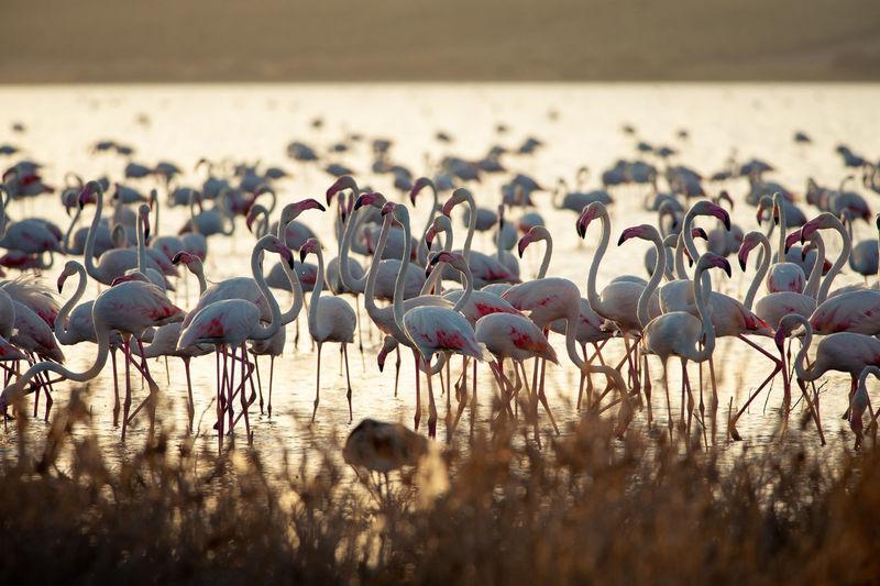 Flamingos Andalucía Andalusia Laguna Fuente De Piedra SPAIN Animal Animal Wildlife Animals In The Wild Bird Flamingo Flamingos Flock Of Birds Fuente De Piedra Group Of Animals Lagoon Large Group Of Animals Nature No People Outdoors