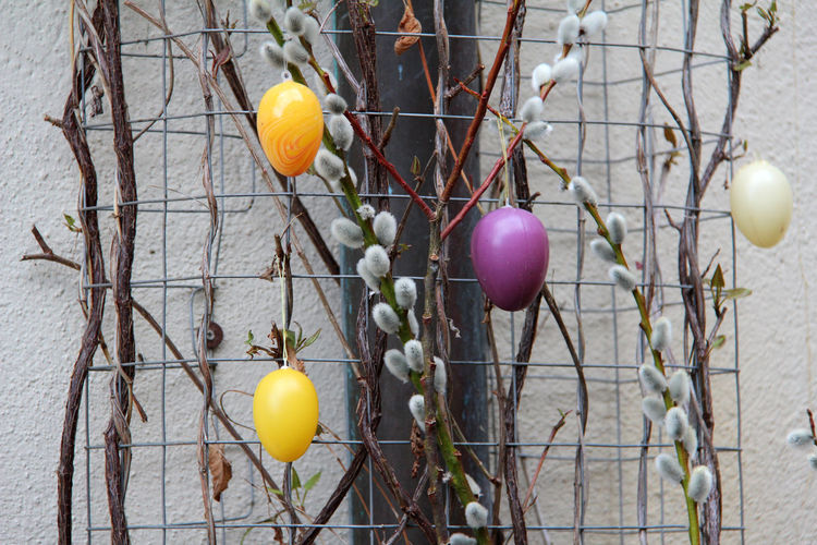 Colorful Easter Eggs Hanging On Bare Tree Against Wall