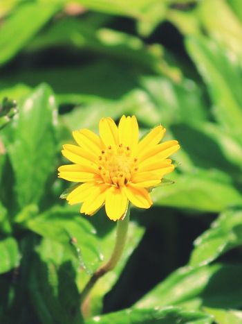 Yellow Flower Awesome_nature_shots Nice Amazing Photography Happy To  Capture The Moment Awesome_captures Another Photo Nature_collection Nature Photography Feeling Happy NiceShot Flowers Flower Photography