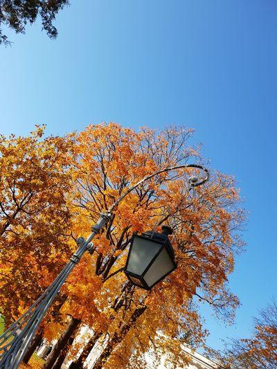 Withgalaxy снятонаgalaxy Saint Petersburg Санкт-Петербург Outdoors Lantern Autumn Sky Fall Leaves Maple Leaf Autumn Collection Maple Maple Tree Fallen Fallen Leaf Change