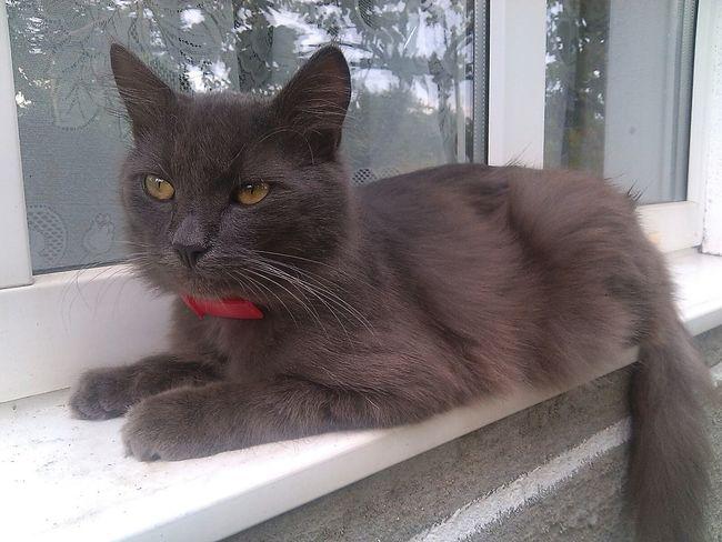 Archibald my lovely pretty Cat мася котэ котя