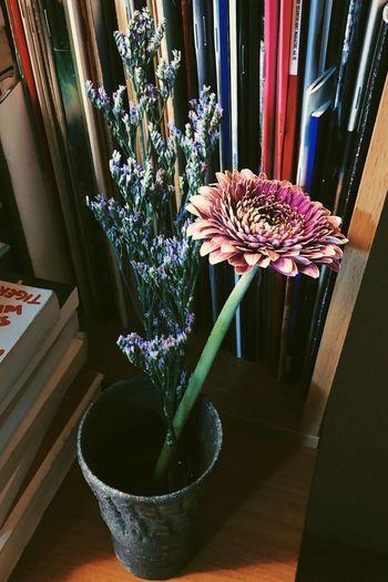 Flower. Plant