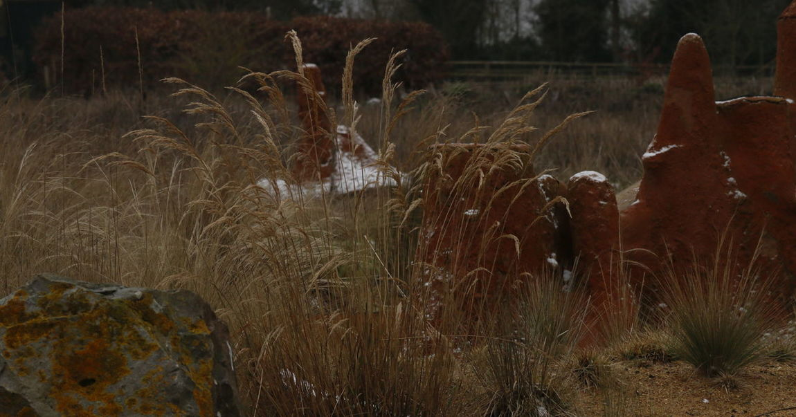 Animal Themes Beauty In Nature Close-up Cultivated Land Day Field Grass Grass Grassland Growth Landscape Landscape_Collection Landscape_photography Nature No People Outdoors Plant Seed Head Snow Winter Yellow Color