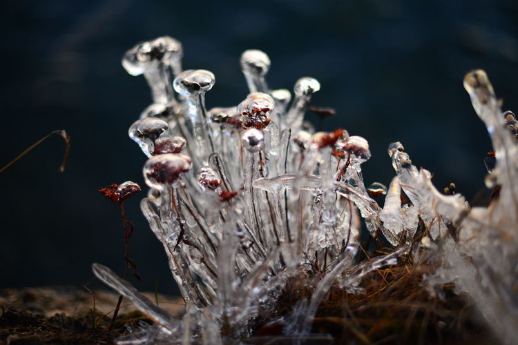 Selective Focus No People Plant Close-up Nature Dry Day Water Land Focus On Foreground Beauty In Nature Outdoors Vulnerability  Flower Growth Fragility Dead Plant Wilted Plant Dried Flowering Plant Mushroom Cold Temperature Ice Cold Winter