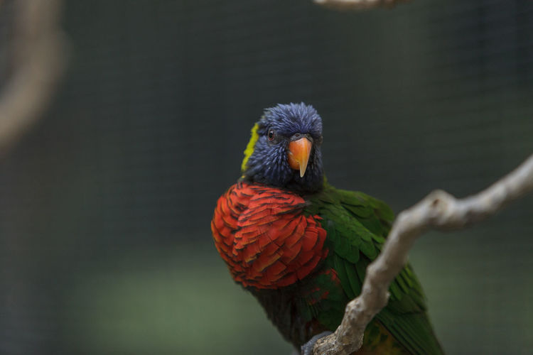Close-Up Of A Parrot Against Blurred Background