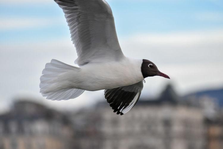 Mouette Bird