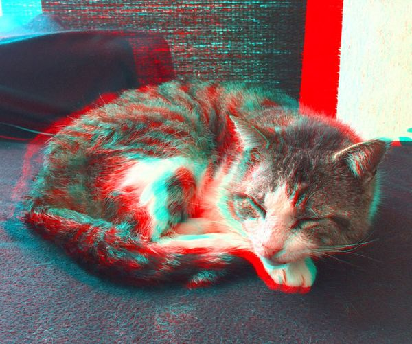 Un sieste en 3D Cat Animals CHATFIE Catfie Chat Mon Ami Le Chat ANAGLYPHE Relief Anaglyph 3D