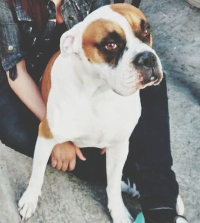 Te Amo♥ Honey Lovely Lovelovelove My Love❤ Amore Photography Dog Love Es El Mejor <3 Consentido ❤???