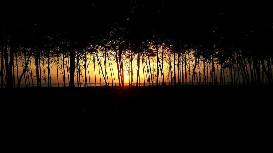 A Walk In The Woods Into The Woods Sunset_collection Sunset✨trees✨ Beach Walk Good Evening Eyeem My Travel Diaries Tree And Sky Treetastic EyeEm Best Shots - Trees