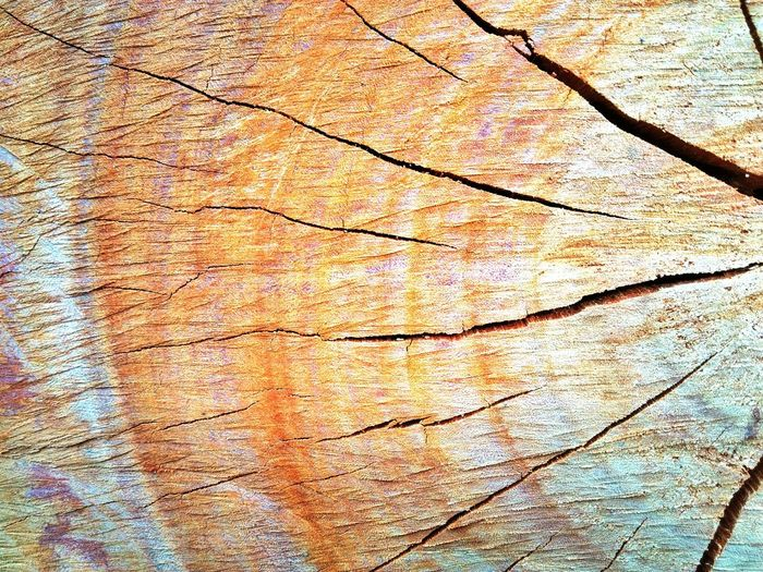 Backgrounds Full Frame Textured  Pattern Abstract Close-up Tree Ring Cracked Marbled Effect Wood Grain Rough Peeling Off Bark Knotted Wood Hardwood Mottled