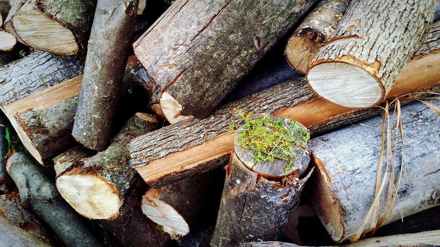Close-up of tree stump