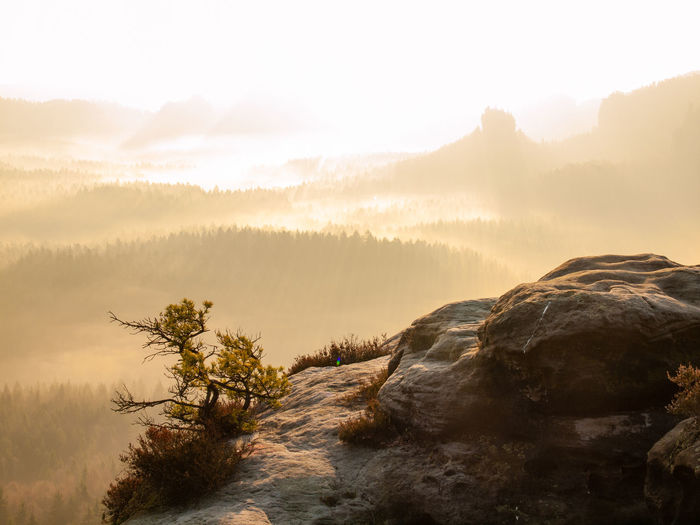 Lone pine over a cliff in the mountains at dawn. broken wild pine bonsai tree. valley full of mist