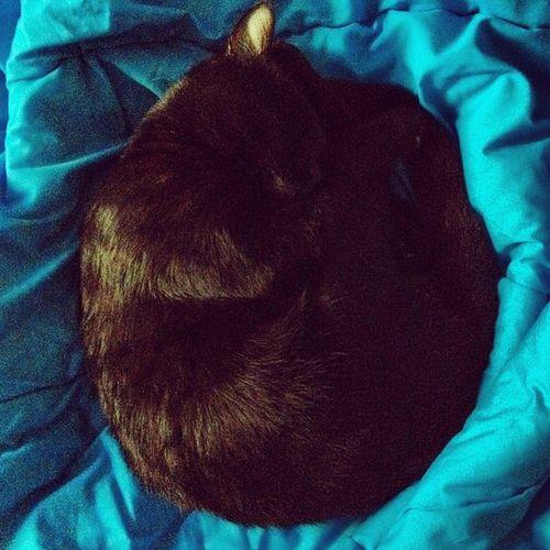 Catstagram Catstangram