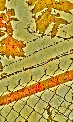 Check This Out Streetphotography Artistic Photo Visual Statements Edit_masters Barbed Wire Fence Leaves Metal Detail Urbanphotography EyeEm Best Shots Shapes EyeEm Gallery Massachusetts Worcester Imagination From My Point Of View Trailblazing Photography Visual Poetry Colorplay Cameraneverstops Cameraphone