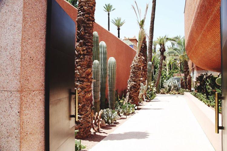 Cacti Sunlight Plant Nature Architecture Day Building Exterior Built Structure