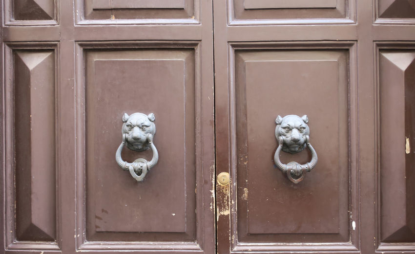 White cat on door
