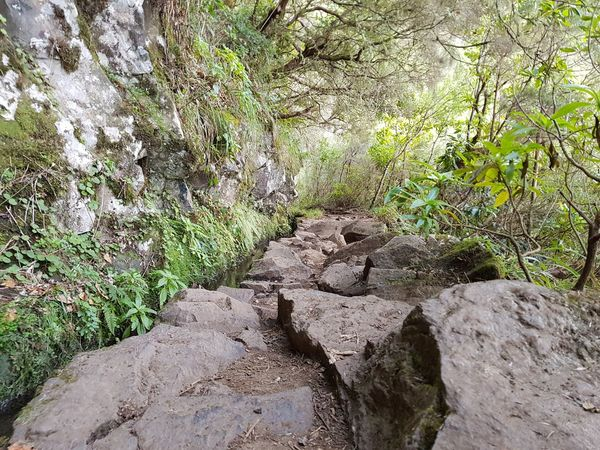 Caldeirão Verde Levada Walk Bildfolge Photography Landscape_Collection Landscape_photography Vacation Time Madeira Island Hike Trail Rock Formation Nature Day No People Outdoors High Angle View Sunlight Beach Beauty In Nature Grass Water Close-up
