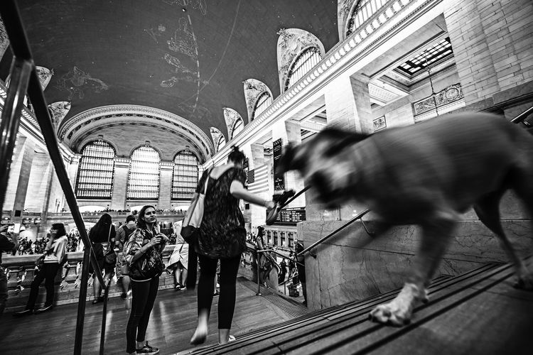 """""""Good Dog"""" EyeEm Best Shots EyeEm Best Shots - Black + White EyeEm Gallery Architecture Blurred Motion Built Structure City Crowd Day Dog Group Of People Leisure Activity Lifestyles Men Motion Outdoors People Real People Walking Women The Art Of Street Photography My Best Photo"""