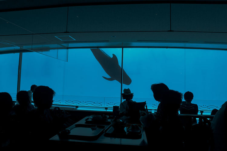 Loneliest fish Animal Wildlife Aquarium Fish Medium Group Of People People Tank Watching Window