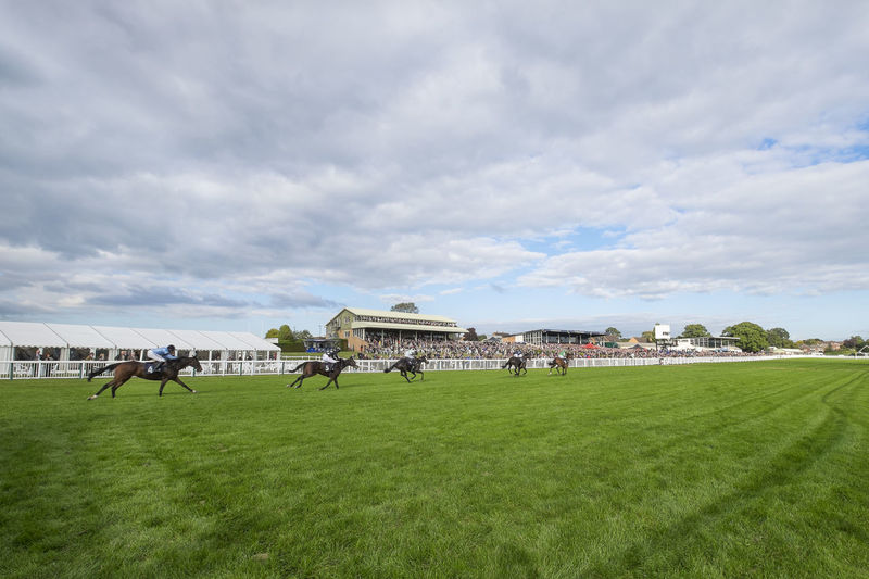 Horse Racing On Grassy Field Against Cloudy Sky