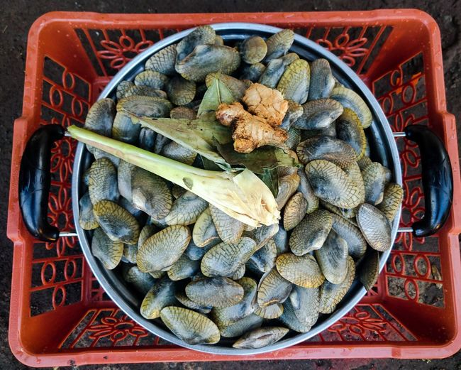 High angle view of sea shells in container