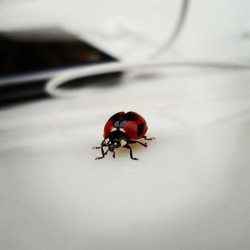 Ladybug ,Bug ,Pocketcamera ,Lofi ,Goodmorning ,Insect ,Outdoorsylife