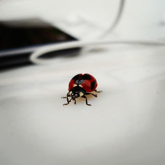Ladybug ,Bug ,Pocketcamera ,Lofi ,Goodmorning ,Insect ,Outdoorsylife