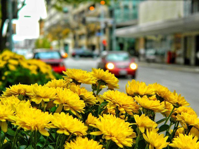 Walking Around Streetview Flowers Bokah City