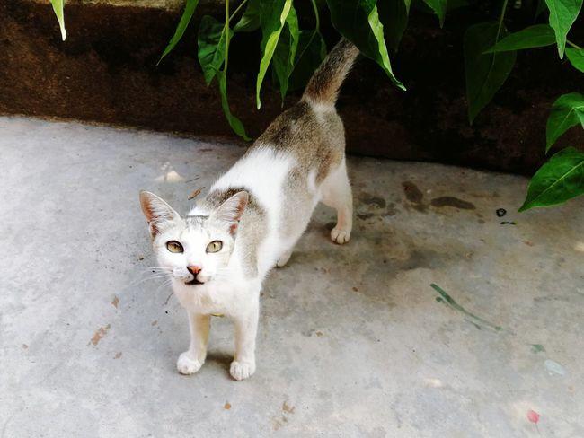 Pets Portrait Alertness Animal Themes Tabby Cat Stray Animal Kitten Cat Young Animal