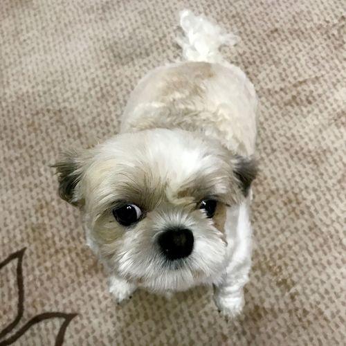 Domestic Canine Dog Pets One Animal Domestic Animals Animal Themes