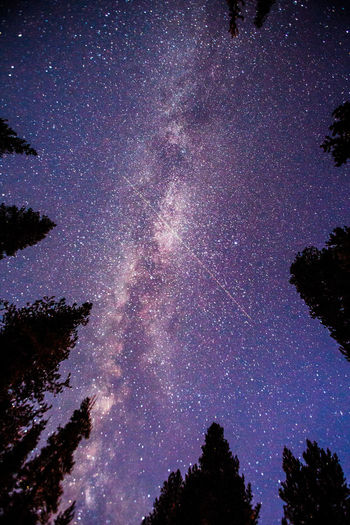 Astronomy Beauty In Nature Blue Fantasy Galaxy Glowing Idyllic Infinity Low Angle View Majestic Milky Way Milkyway Mystery Nature Night Outdoors Scenics Silhouette Sky Space Star - Space Star Field Tranquil Scene Tranquility Tree