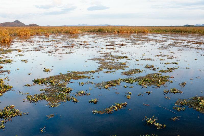 Palo Verde National Park Water Hyacinth Marsh Swamp Outdoors Lake Nature Scenics - Nature Water Environment Idyllic Costa Rica Wetlands Wetland Palo Verde National Park Guanacaste  Landscape