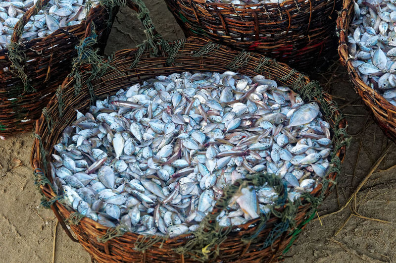 High angle view of fish in basket at market