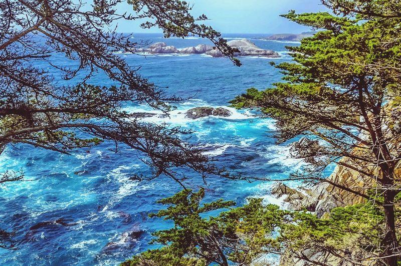 Nature Speaks Tree Sea Water Waves Dramatic Sky California Ocean Nature Inner Power
