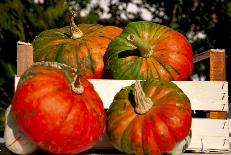 Close-up of orange pumpkins on wood