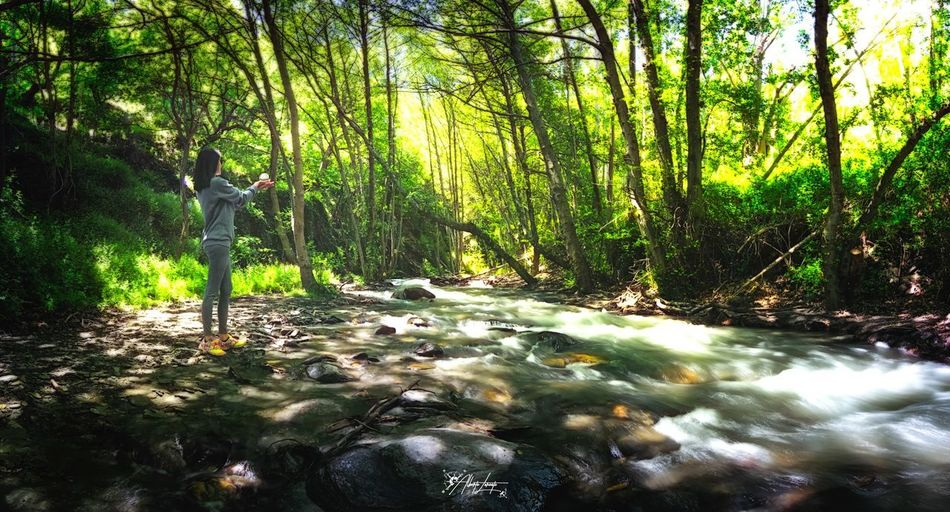 Naturalmente natural ! Forest Longexposure Landscape Tree Growth Land Tranquility Day Green Color Sunlight Flowing Water Scenics - Nature Tranquil Scene First Eyeem Photo The Traveler - 2018 EyeEm Awards