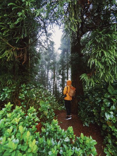 Lost somewhere beautiful Adventure Azores Travel Self Portrait EyeEm Best Shots Travel Destinations Plant Tree Growth Nature Day Green Color Forest Outdoors Land Beauty In Nature Low Angle View Foliage Abundance Tranquility Autumn Mood