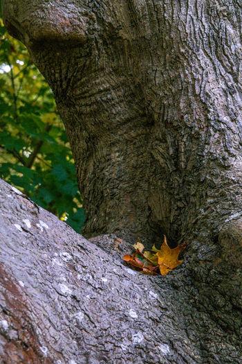 Close-up of elephant on tree trunk
