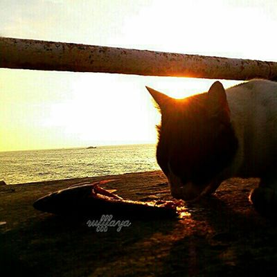 cats lunch in sunset
