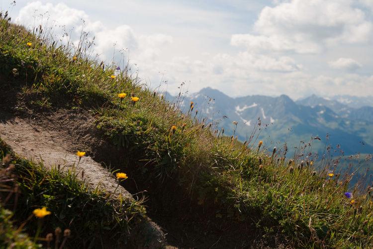 Alps Beauty In