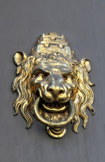 Lion - Feline