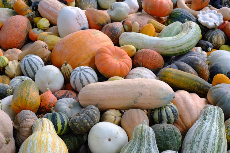 Abundance Choice Close-up Day Fall Food Food And Drink Freshness Fruit Full Frame Healthy Eating Large Group Of Objects No People Organic Outdoors Pumpkin Variation Vegetable