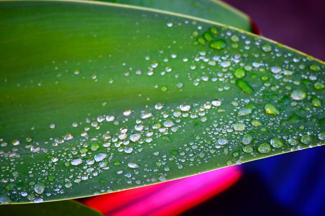 Beauty In Nature Blade Of Grass Close-up Day Dew Drop Flower Fragility Freshness Green Color Growth Leaf Nature No People Outdoors Plant Plant Part Purity Rain RainDrop Selective Focus Vulnerability  Water Wet