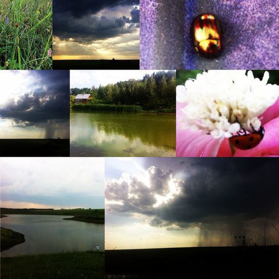 Collage Nature No People Raine Lake River Standing Water
