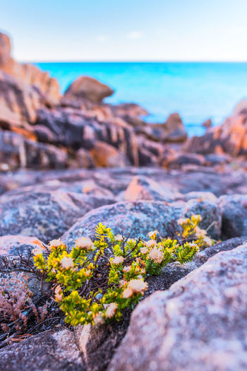 Rocky beach on Australia's South West Rock Rock - Object Beauty In Nature Sea Nature Solid Sky Land Water No People Scenics - Nature Day Selective Focus Tranquility Plant Tranquil Scene Horizon Over Water Outdoors Travel Destinations Australia Colorful Beach
