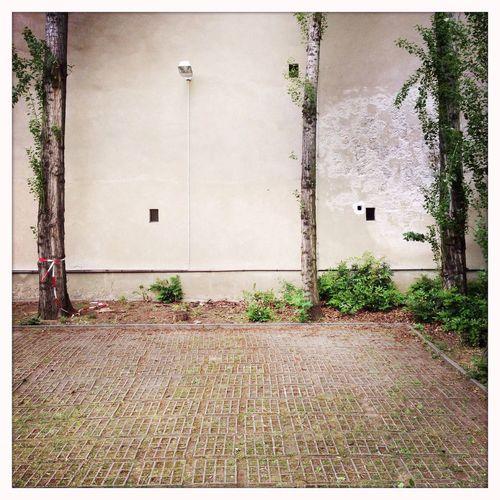 Simplicity Hinterhofromantik Texture Architectural Detail The Secret Spaces